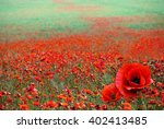 Red Poppy Flowers On The Field...