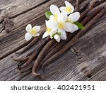 vanilla with jasmine flowers | Shutterstock . vector #402421951