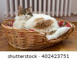 Stock photo cat laying in the basket with radiator background 402423751
