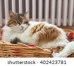 Stock photo cat laying in the basket with radiator background 402423781