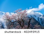 the wild tibetan peach blossoms ... | Shutterstock . vector #402493915