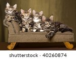 3 Cute Maine Coon Kittens On...