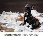 Stock photo funny dog and cat playing with toilet paper dog french bulldog puppy black color background wood 402724657
