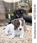 Stock photo two small puppies playing on woven ottoman outside on wooden deck 402730144