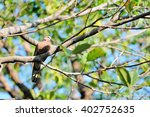 bird perched on tree branches | Shutterstock . vector #402752635
