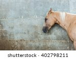 Beige Horse On A Background Of...