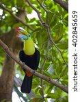 keel billed toucan | Shutterstock . vector #402845659