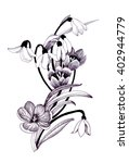 Sketched Snowdrops Flowers On...