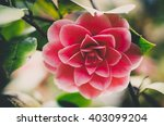 lush green fresh blossoming... | Shutterstock . vector #403099204