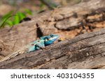 gila   Shutterstock . vector #403104355