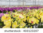 Colorful Yellow Orchid Flowers...