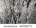 leafless platanus trees. a game ... | Shutterstock . vector #403180771