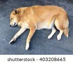 Dog Sleeping On Street  Hot...