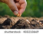 farmer's hand planting seed in... | Shutterstock . vector #403210669