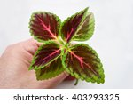 flower with beautiful leaves... | Shutterstock . vector #403293325