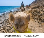 dahab  red sea  sinai peninsula ... | Shutterstock . vector #403335694