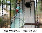 love bird | Shutterstock . vector #403335901
