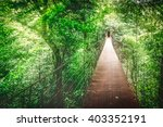 monteverde cloud forest ... | Shutterstock . vector #403352191