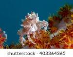 Hoplophrys Oatesi Also Known A...