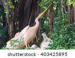 pelican in the forest | Shutterstock . vector #403425895