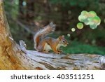 Small photo of Concept image of a female red squirrel thinking. The abstract thought bubble is shaped and edited from bright spots of a blurred background within the original photo