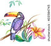 watercolor toucan bird  pattern ... | Shutterstock . vector #403584745