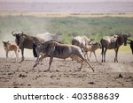 antelope running | Shutterstock . vector #403588639