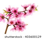 pink spring flowers on a branch ... | Shutterstock . vector #403600129