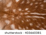 Texture Of Real Axis Sika Deer...