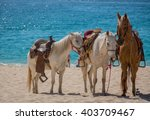 Horses On A Mexican Beach...