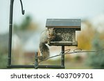 Squirrel Stealing Seeds From A...