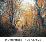 autumn forest. forest trail in... | Shutterstock . vector #403737529
