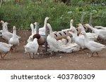 geese | Shutterstock . vector #403780309
