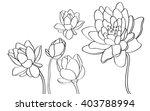lotus vector illustration | Shutterstock .eps vector #403788994