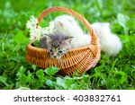 Stock photo group of little kitten in a basket on the grass 403832761