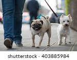 Stock photo city dogs 403885984