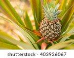 Pineapples Fruit Raw  Organic...