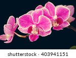 beautiful branch of pink... | Shutterstock . vector #403941151