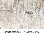 wooden trunk  | Shutterstock . vector #403963147