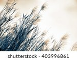 grass soft focus blurred... | Shutterstock . vector #403996861