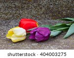 Red  Yellow And Purple Tulips...