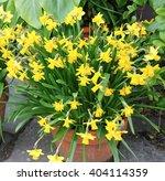 Terracotta Flowerpot Of Tete A...