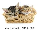 Lovely Kittens Sleeping In...