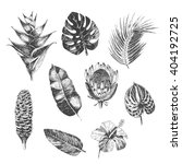 vector hand drawn tropical... | Shutterstock .eps vector #404192725