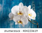 white orchid flower on blue... | Shutterstock . vector #404223619