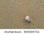 fossil shell on the sand beach  ... | Shutterstock . vector #404304721