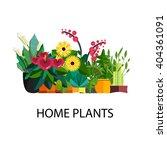 decorative houseplants isolated ... | Shutterstock .eps vector #404361091