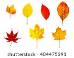 autumn colored leaves  isolated ... | Shutterstock . vector #404475391