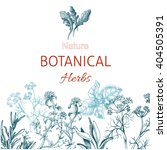 vector background sketch herbs. ... | Shutterstock .eps vector #404505391