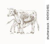 Cow Feeding Calf Sketch. Mom...
